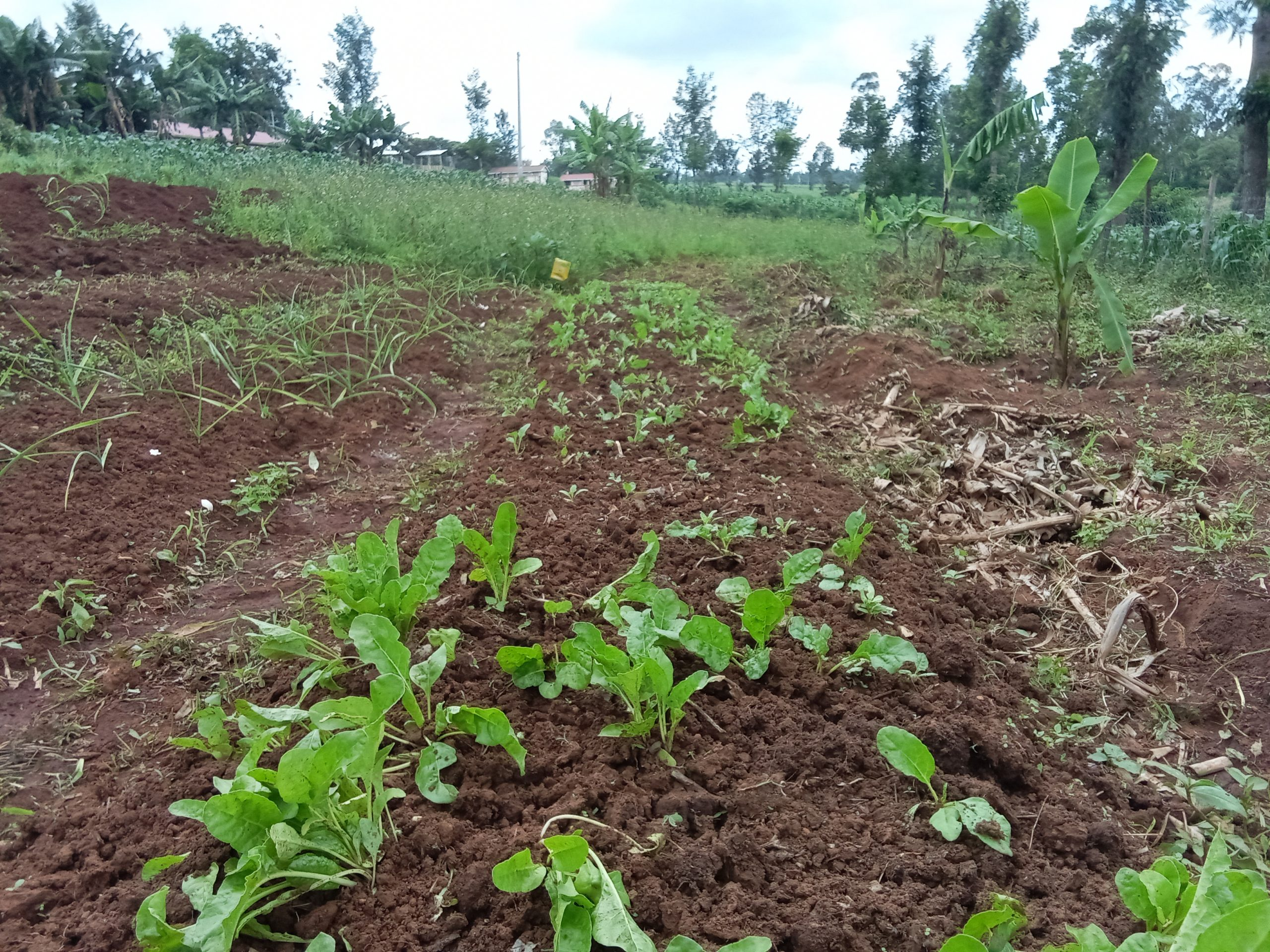 Developing  the situation of highly hazardous pesticides and alternatives in Kenya